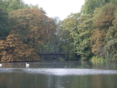 Связь архитектуры и природы - озеро в парке г. Дюссельдорф
